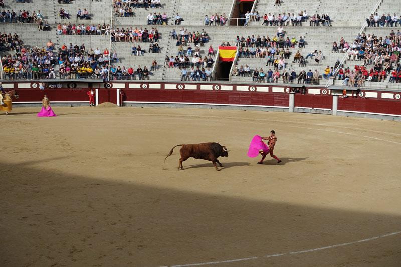 bullfight3