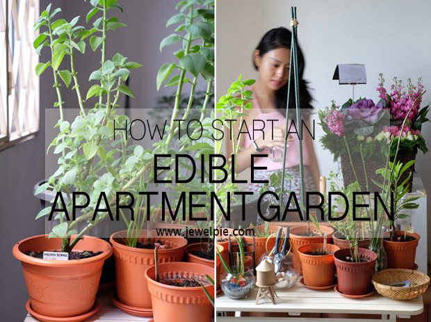 How to start an apartment garden in a tropical country